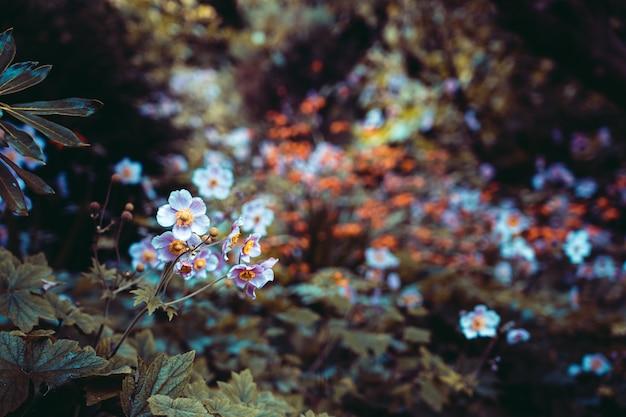 Piękny ogród z kwiatami, efekt grunge