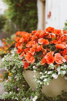 Piękny ogród z kwitnącymi roślinami. kwietnik z czerwono-białymi kwiatami