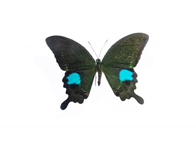 Piękny okaz motyla