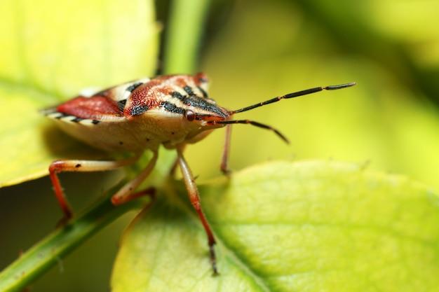 Piękny owad na soczystym zielonym liściu