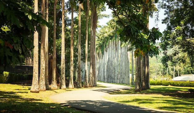 Piękny palmowy park tropikalny na sri lance. atrakcje cejlonu