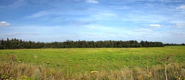 Piękny panoramiczny krajobraz wsi z zielonym polem, lasem mieszanym daleko i białymi chmurami na błękitnym niebie w południe w letni dzień