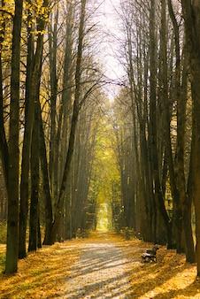 Piękny park jesień, drzewa na alei z ławką
