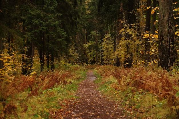Piękny park jesienią. jesienne drzewa i liście.