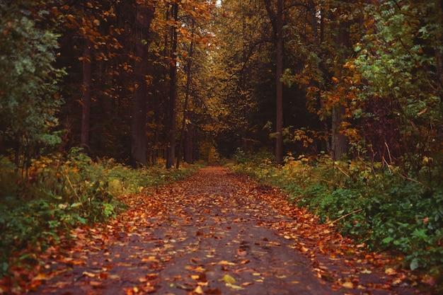 Piękny park jesienią. park na relaks