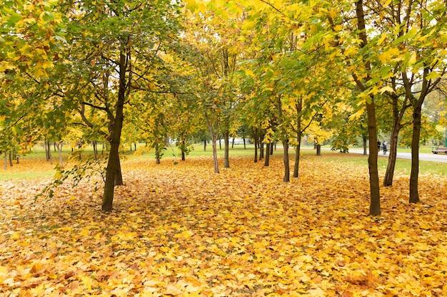 Piękny park z klonami jesienią.