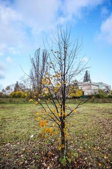 Piękny park z kolorowymi jesiennymi drzewami i suszonymi liśćmi pod zachmurzonym niebem