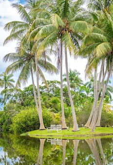 Piękny park z tropikalną przyrodą i palmami