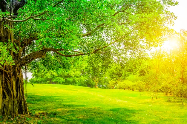 Piękny park