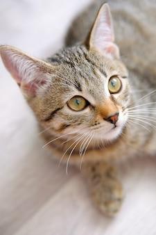 Piękny pasiasty śliczny smutny zamyślony szary kotek