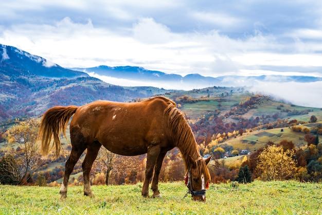 Piękny, pełen wdzięku ogier spaceruje po zielonym polu i zjada soczystą świeżą trawę