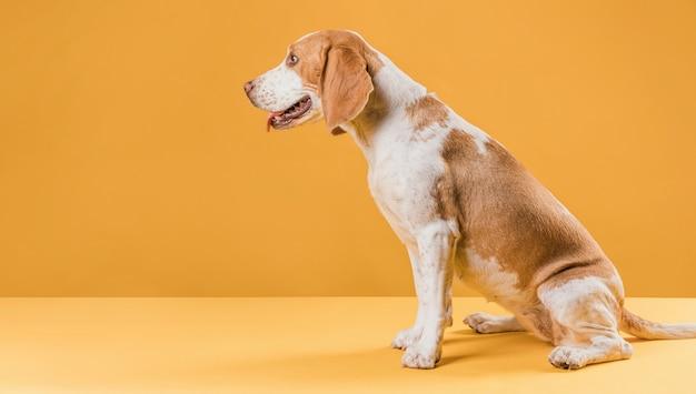 Piękny pies czeka na polecenie
