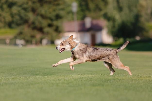 Piękny pies na zielonym polu