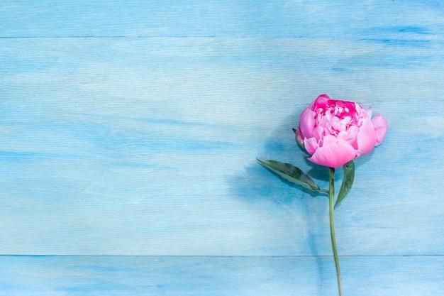 Piękny pione na niebieskim tle. skopiuj miejsce