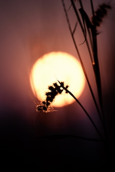 Piękny plama kwiat, bokeh z światłem słonecznym i.