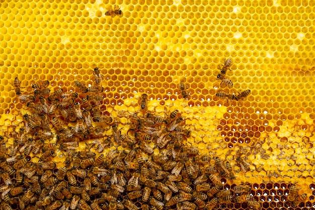 Piękny plaster miodu z pszczołami