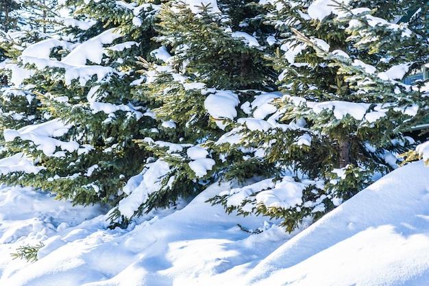 Piękny plenerowy natura krajobraz z drzewem
