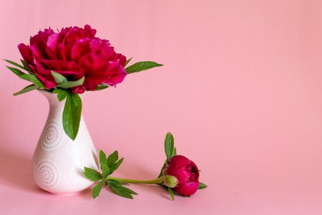 Piękny pojedynczy piwonia kwiat w wazonie na różowym