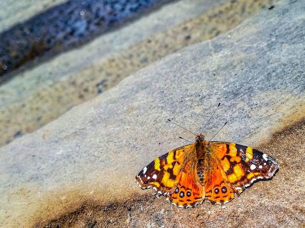 Piękny pomarańczowy motyl na chodniku w obszarze miejskim
