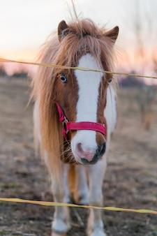 Piękny portret konia rodowodowego na zewnątrz podczas zachodu słońca