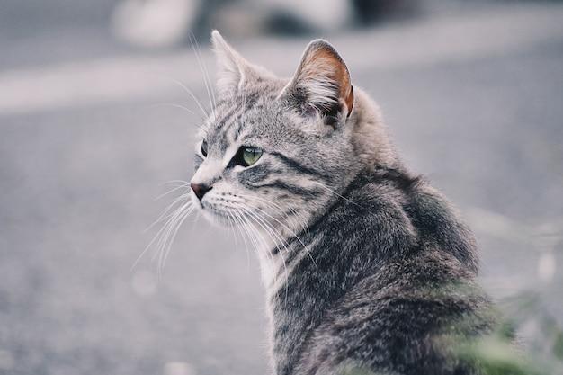 Piękny portret kota na ulicy. darmowa strona na tekst