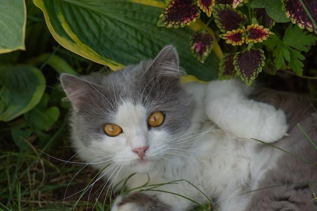 Piękny portret kota.