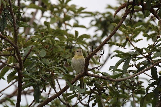 Piękny ptak inn natura bliska szczegółów