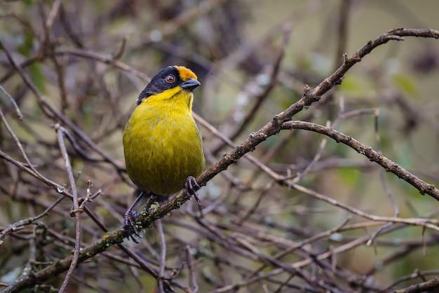 Piękny ptak siedzący na drzewie pełnym gałęzi