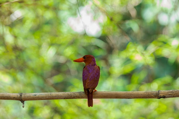 Piękny ptak siedzący na gałęzi drzewa z rozmytym tłem