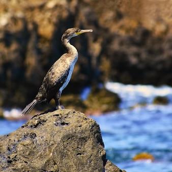 Piękny ptak siedzi na kamieniu nad morzem