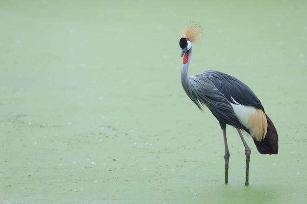 Piękny ptak w rzece