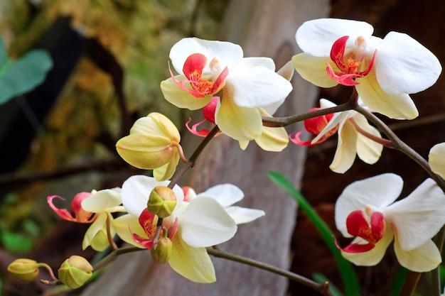 Piękny purpurowo-żółty kwiat orchidei. złożone zdjęcie makro ze znaczną głębią ostrości.