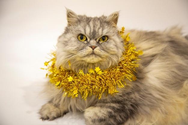 Piękny puszysty kot szkocki leży ze złotą świąteczną dekoracją na białym tle. nowy rok ze zwierzakiem