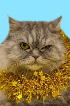 Piękny puszysty kot szkocki leży ze złotą świąteczną dekoracją na niebieskim tle. nowy rok ze zwierzakiem