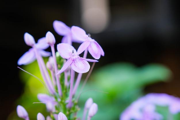Piękny Różowy Igielny Kwiat W Ogródzie Premium Zdjęcia
