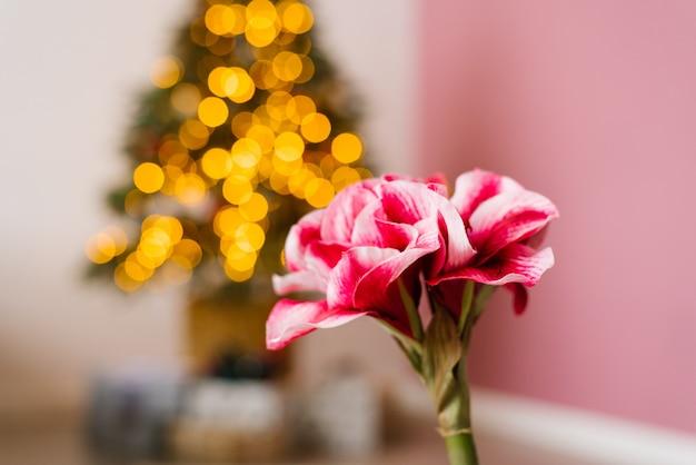 Piękny różowy kwiat na tle lampek choinkowych. skopiuj miejsce