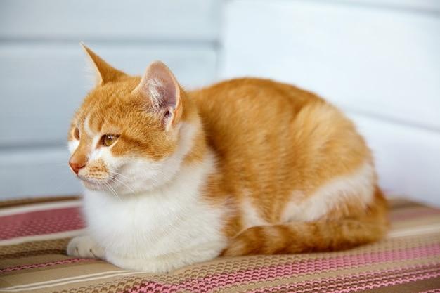 Piękny rudy kot leży na poduszce w paski