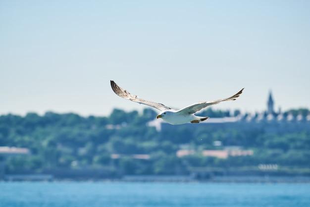 Piękny seagull latanie w powietrzu