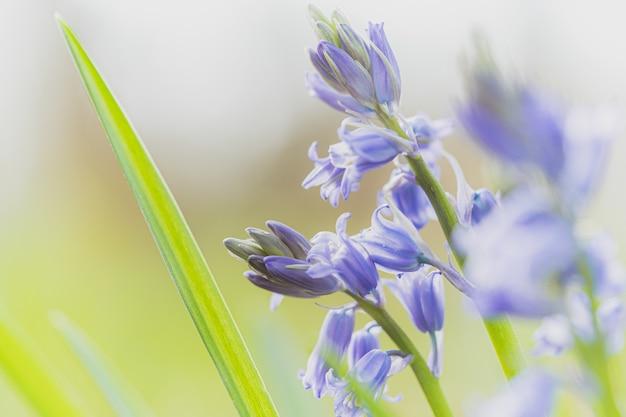Piękny selektywny strzał ostrości fioletowy kwiat