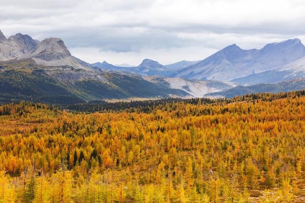 Piękny sezon jesienny w kanadyjskich górach. spadek tła.