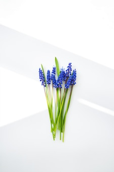 Piękny skład - niebieski muscari leżą na białym stole