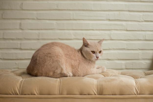 Piękny śliczny pomarańczowo-szary kot