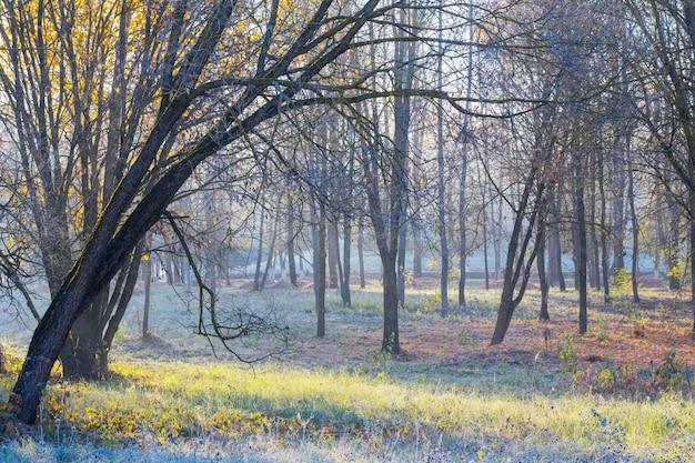 Piękny słoneczny krajobraz jesień z mrozem