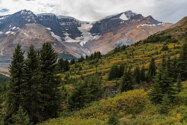 Piękny śnieżny lodowiec z drzewami i górami w parku narodowym japser, alberta, kanada