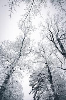 Piękny śnieżny teren zimą z nagimi drzewami pokrytymi śniegiem, tworząc zapierające dech w piersiach krajobrazy