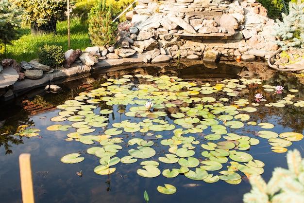 Piękny staw z lilią wodną, krajobrazem i ogrodem skalnym
