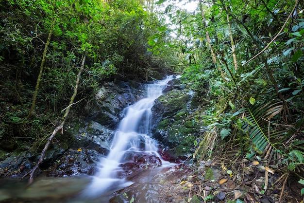Piękny strumień wody spływającej w lasach tropikalnych. kostaryka, ameryka środkowa