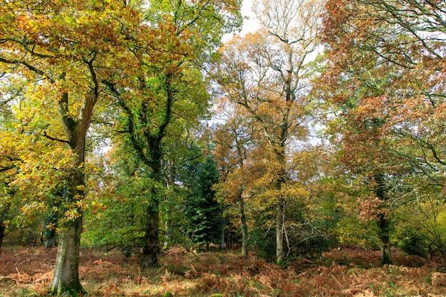 Piękny strzał drzewa z jesień liśćmi w nowym lesie blisko brockenhurst, uk
