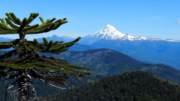 Piękny strzał drzewo z górami w odległości pod jasnym niebieskim niebem