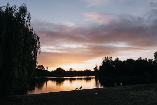 Piękny strzał jezioro otaczający drzewami podczas złotej godziny